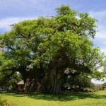 tree-pub