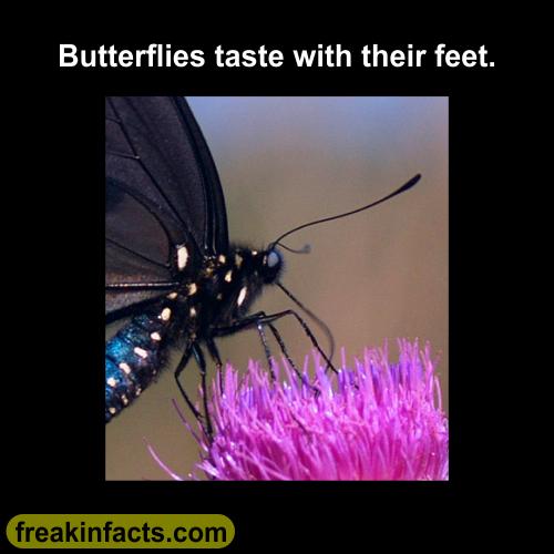 butterfly-feet